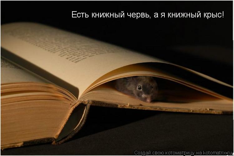 Котоматрица: Есть книжный червь, а я книжный крыс!