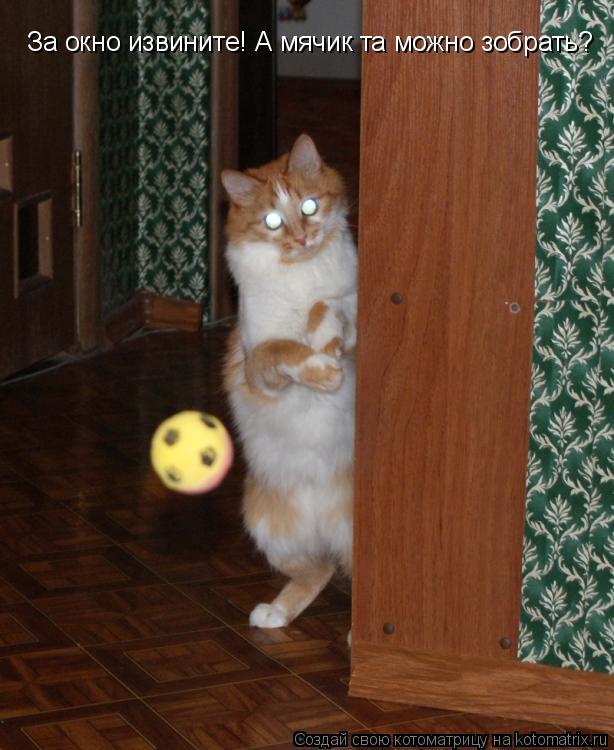 Котоматрица: За окно извините! А мячик та можно зобрать?
