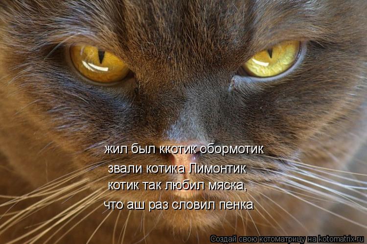 Котоматрица: жил был ккотик обормотик звали котика Лимонтик котик так любил мяска , что аш раз словил пенка