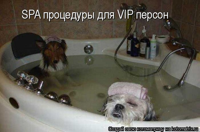 Котоматрица: SPA процедуры для VIP персон