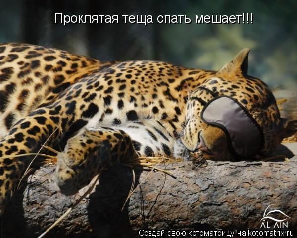 Котоматрица: Проклятая теща спать мешает!!!