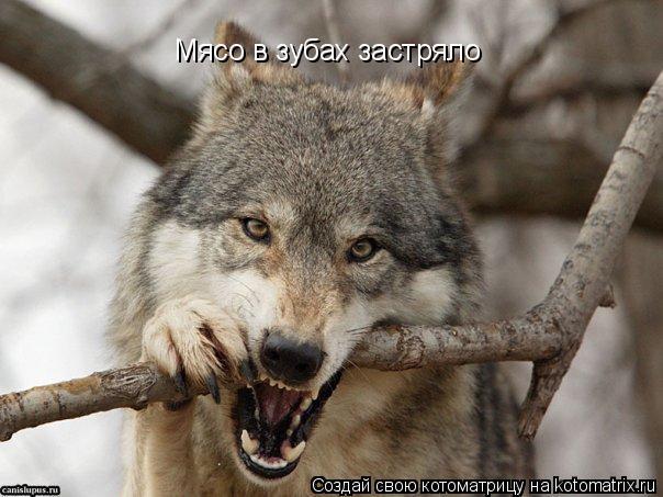 Котоматрица: Мясо в зубах застряло