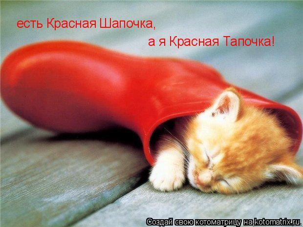 Котоматрица: есть Красная Шапочка, а я Красная Тапочка!