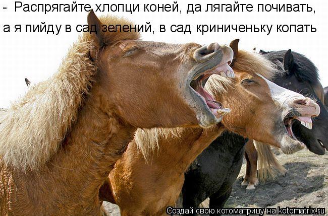 Котоматрица: -  Распрягайте хлопци коней, да лягайте почивать,  а я пийду в сад зелений, в сад криниченьку копать