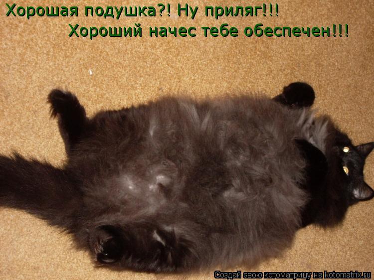 Котоматрица: Хорошая подушка?! Ну приляг!!! Хороший начес тебе обеспечен!!!