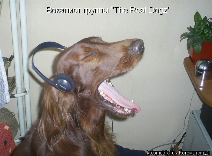 """Котоматрица: Вокалист группы """"The Real Dogz"""""""