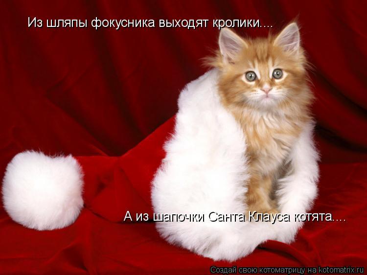 Котоматрица: Из шляпы фокусника выходят кролики.... А из шапочки Санта Клауса котята....