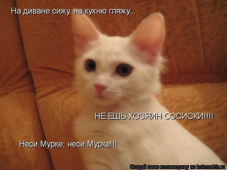 Котоматрица: На диване сижу, на кухню гляжу... НЕ ЕШЬ ХОЗЯИН СОСИСКИ!!!! Неси Мурке, неси Мурке!!!