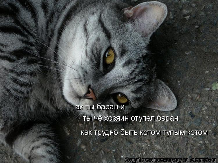 Котоматрица: как трудно быть котом тупым котом ты чё хозяин отупел баран  ах ты баран и ...