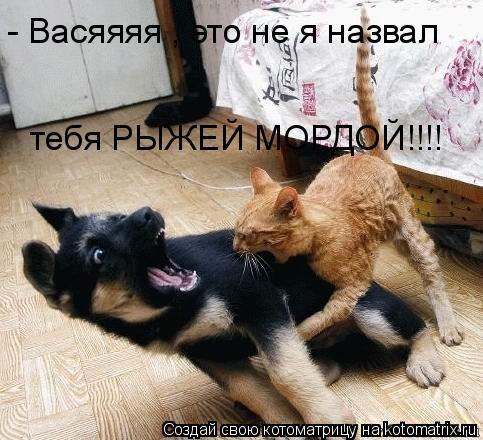 Котоматрица: - Васяяяя , это не я назвал  тебя РЫЖЕЙ МОРДОЙ!!!!