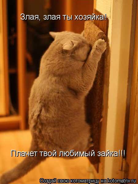 Котоматрица: Злая, злая ты хозяйка! Плачет твой любимый зайка!!!