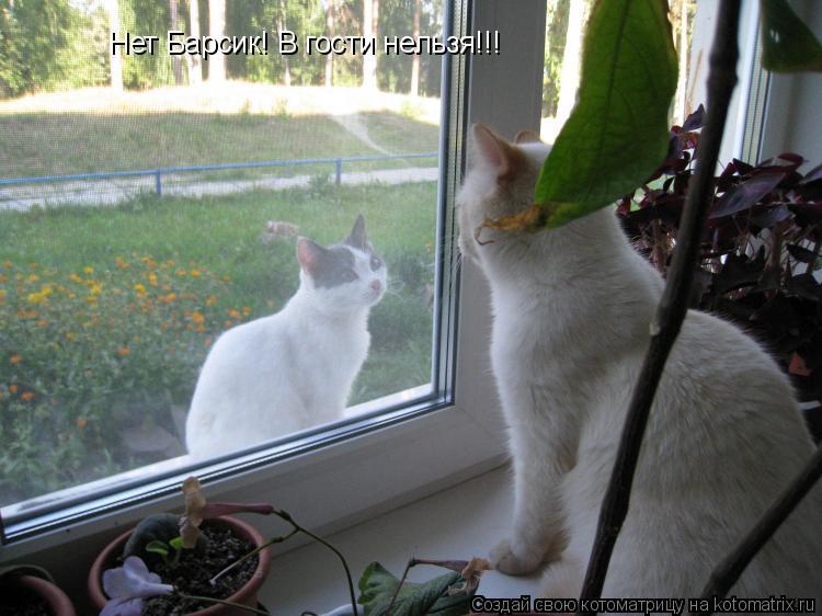 Котоматрица: Нет Барсик! В гости нельзя!!!