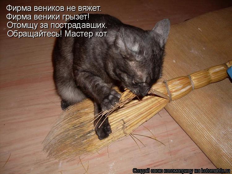 Котоматрица: Фирма веников не вяжет. Фирма веники грызет! Отомщу за пострадавших. Обращайтесь! Мастер кот.