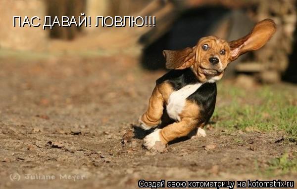 Котоматрица: ПАС ДАВАЙ! ЛОВЛЮ!!!