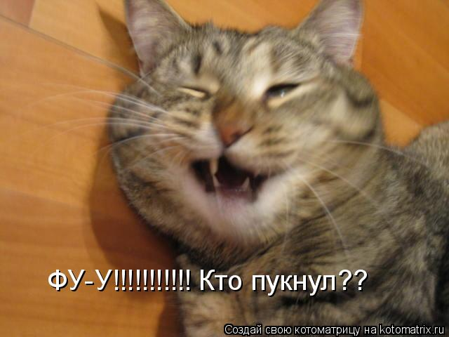Котоматрица: ФУ-У!!!!!!!!!!! Кто пукнул??