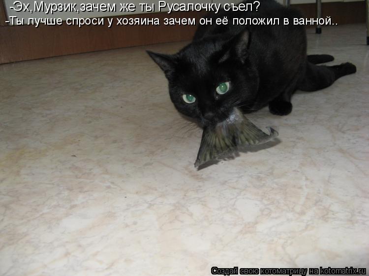 Котоматрица: -Эх,Мурзик,зачем же ты Русалочку съел? -Ты лучше спроси у хозяина зачем он её положил в ванной..