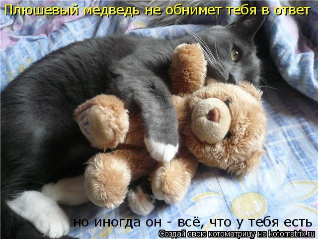 Котоматрица: Плюшевый медведь не обнимет тебя в ответ но иногда  но иногда он - всё, что у тебя есть