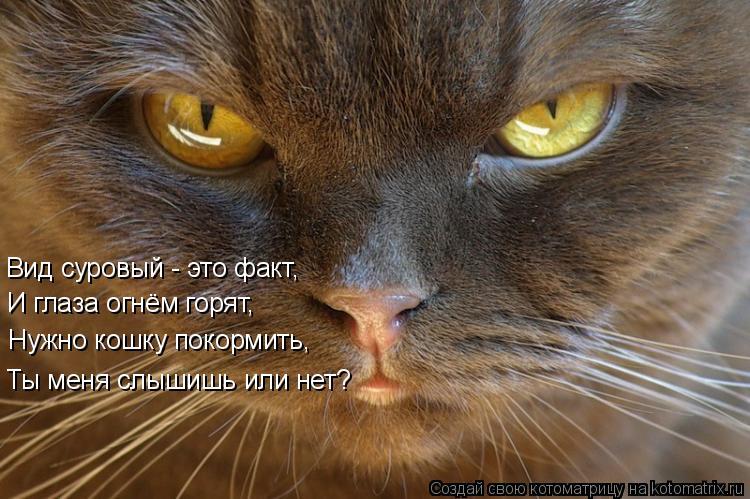 Котоматрица: Вид суровый - это факт, И глаза огнём горят, Нужно кошку покормить, Ты меня слышишь или нет?