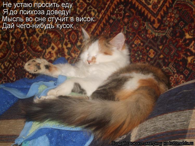 Котоматрица: Не устаю просить еду Я до психоза доведу! Мысль во сне стучит в висок: Дай чего-нибудь кусок...