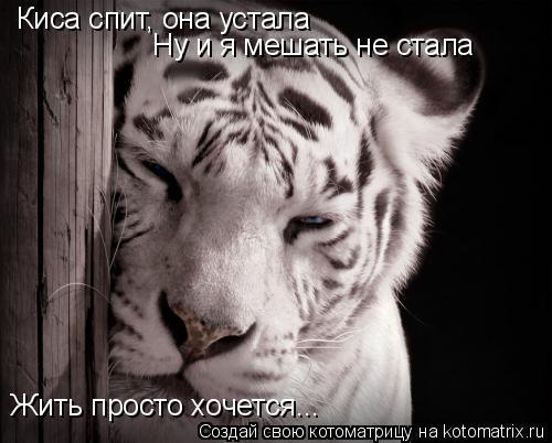 Котоматрица: Киса спит, она устала Ну и я мешать не стала Жить просто хочется...