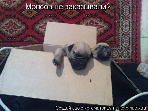 Котоматрица: Мопсов не заказывали?