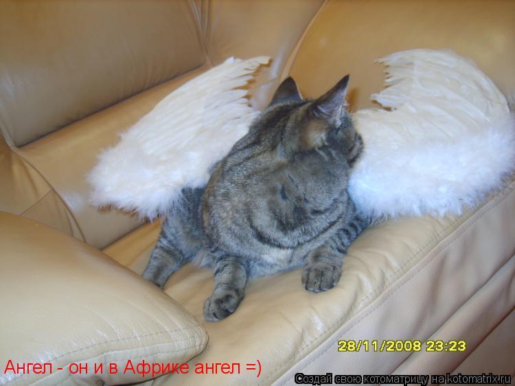Котоматрица: Ангел - он и в Африке ангел =)