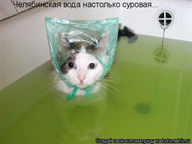 Котоматрица: Челябинская вода настолько суровая...