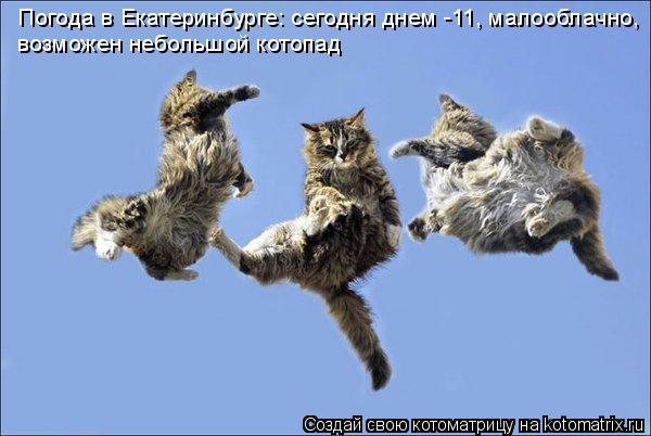 Котоматрица: Погода в Екатеринбурге: сегодня днем -11, малооблачно,  возможен небольшой котопад