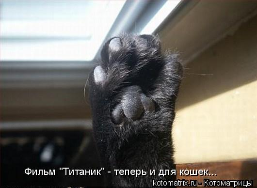 """Котоматрица: Фильм """"Титаник"""" - теперь и для кошек..."""