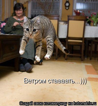 Котоматрица: Ветром стаааать...)))