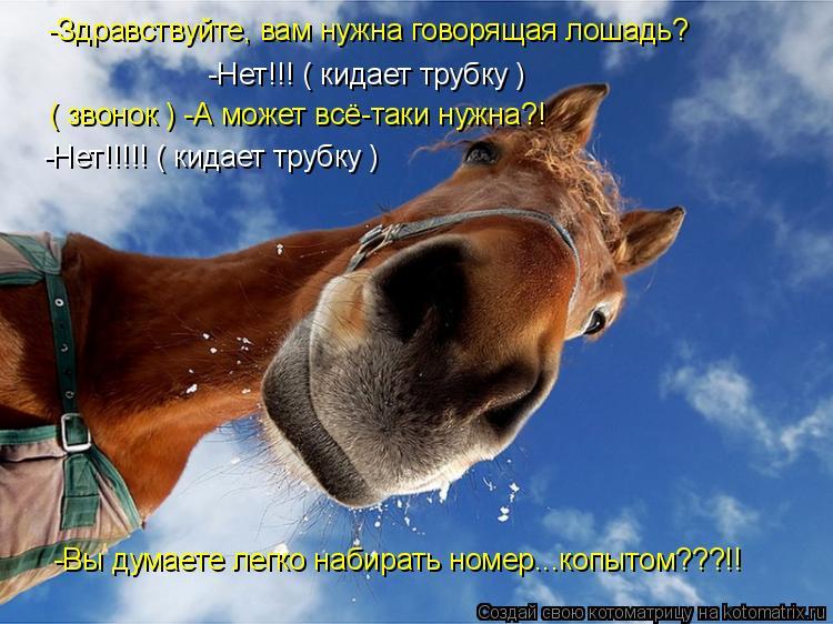 Котоматрица: -Здравствуйте, вам нужна говорящая лошадь? -Нет!!! ( кидает трубку ) ( звонок ) -А может всё-таки нужна?! -Нет!!!!! ( кидает трубку ) -Вы думаете легк
