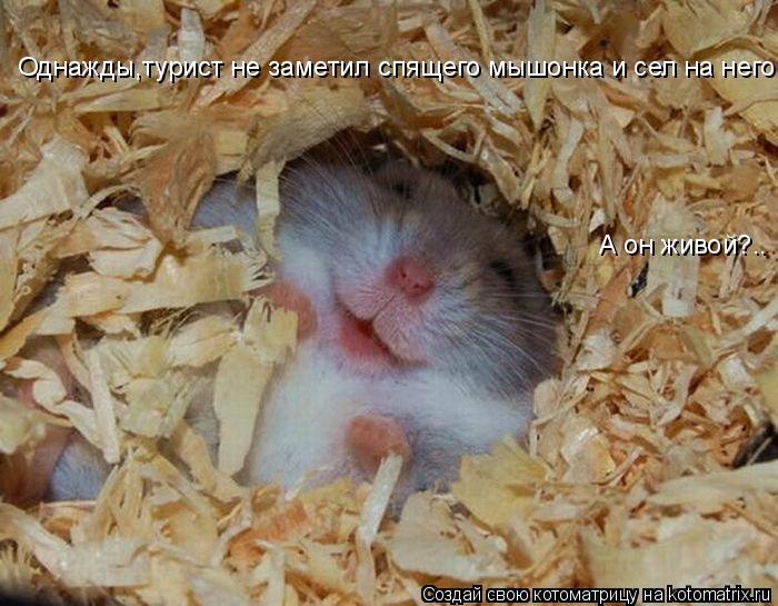 Котоматрица: А он живой?.. Однажды,турист не заметил спящего мышонка и сел на него