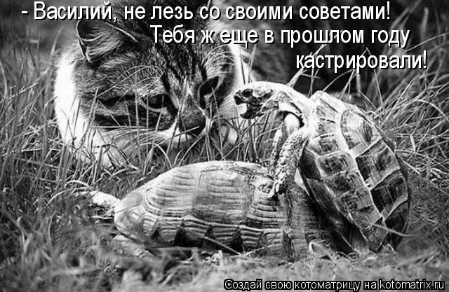 Котоматрица: - Василий, не лезь со своими советами!  Тебя ж еще в прошлом году  кастрировали!