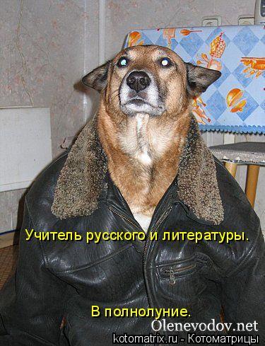 Котоматрица: Учитель русского и литературы. В полнолуние.