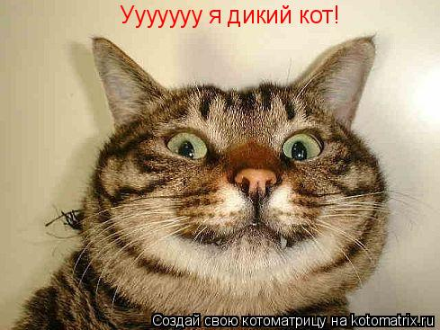 Котоматрица: Ууууууу я дикий кот!