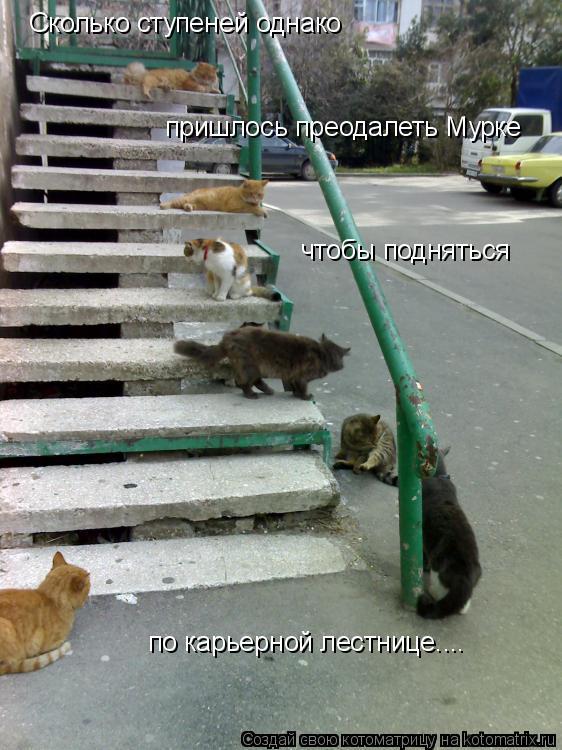 Котоматрица: Сколько ступеней однако пришлось преодалеть Мурке чтобы подняться по карьерной лестнице....