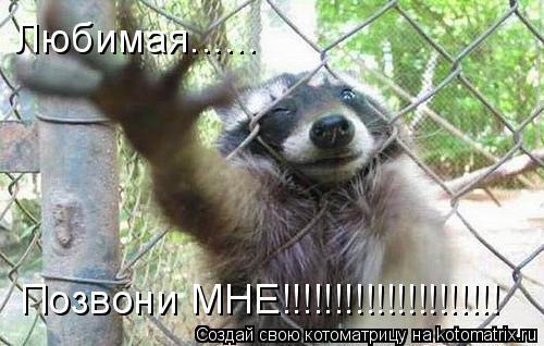 Котоматрица: Любимая...... Позвони МНЕ!!!!!!!!!!!!!!!!!!!!!