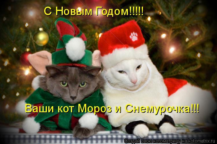 Котоматрица: С Новым Годом!!!!! Ваши кот Мороз и Снемурочка!!!