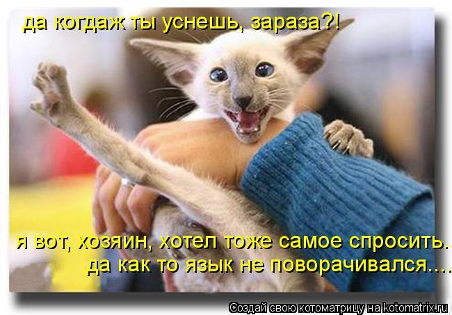 Котоматрица: да когдаж ты уснешь, зараза?! я вот, хозяин, хотел тоже самое спросить... да как то язык не поворачивался....