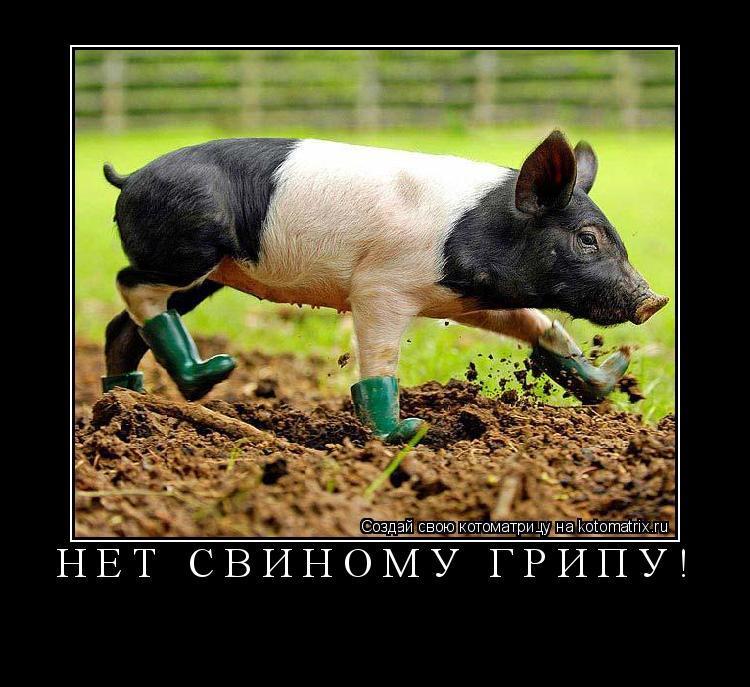 Котоматрица: нет свиному грипу!