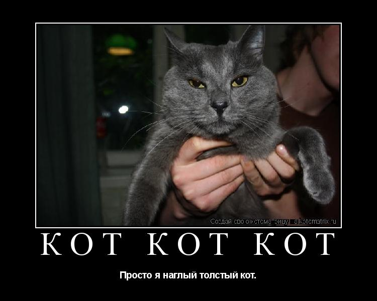Котоматрица: кот кот кот Просто я наглый толстый кот.