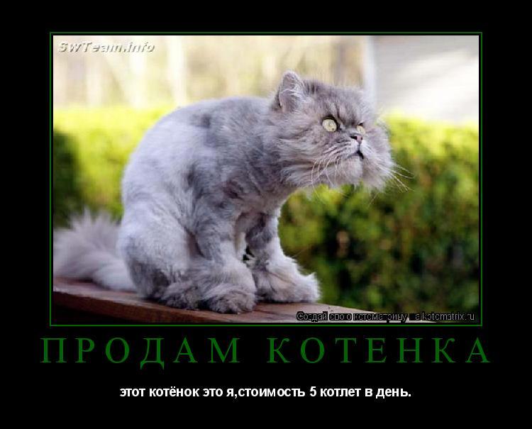 Котоматрица: Продам котёнка этот котёнок это я,стоимость 5 котлет в день.
