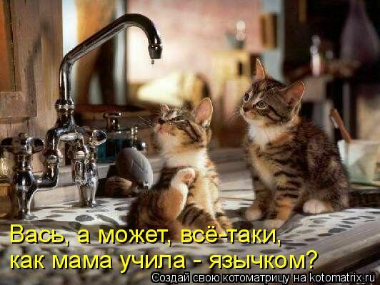 Котоматрица: Вась, а может, всё-таки,  как мама учила - язычком?