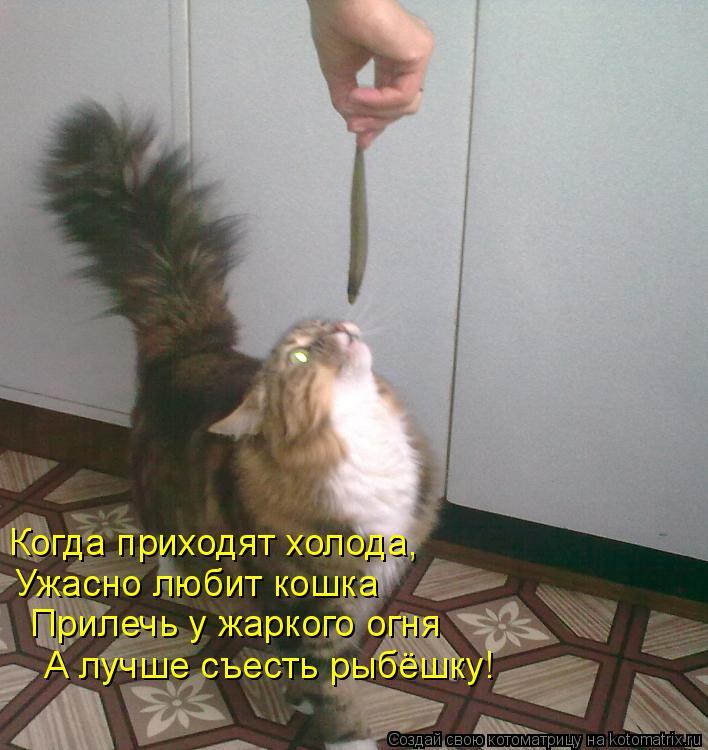 Котоматрица: Когда приходят холода, Ужасно любит кошка Прилечь у жаркого огня А лучше съесть рыбёшку!