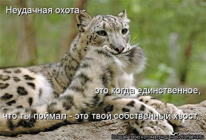 Котоматрица: Неудачная охота - это когда единственное,  что ты поймал - это твой собственный хвост...