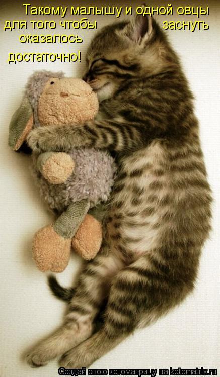 Котоматрица: Такому малышу и одной овцы  для того чтобы заснуть оказалось  достаточно!