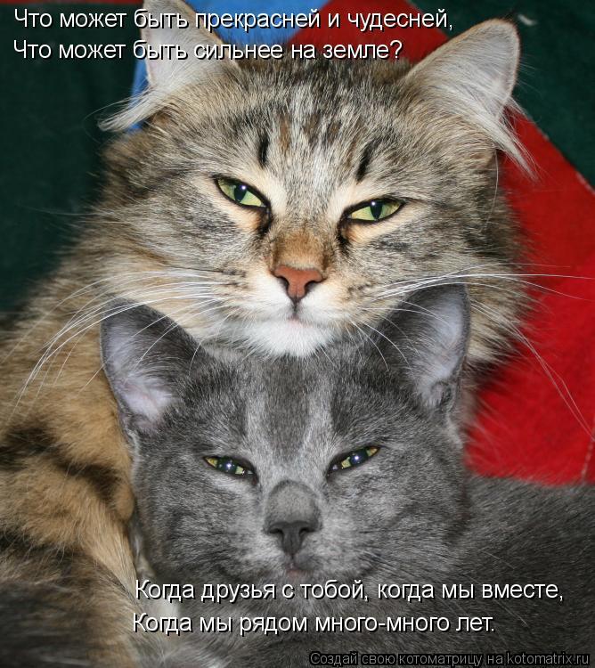 Котоматрица: Что может быть прекрасней и чудесней, Что может быть сильнее на земле? Когда друзья с тобой, когда мы вместе, Когда мы рядом много-много лет.