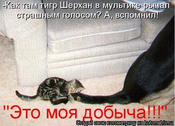 """Котоматрица: -Как там тигр Шерхан в мультике рычал  страшным голосом? А, вспомнил!  """"Это моя добыча!!!"""""""