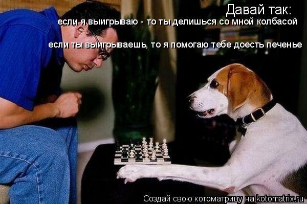 Котоматрица: Давай так: если я выигрываю - то ты делишься со мной колбасой если ты выигрываешь, то я помогаю тебе доесть печенье