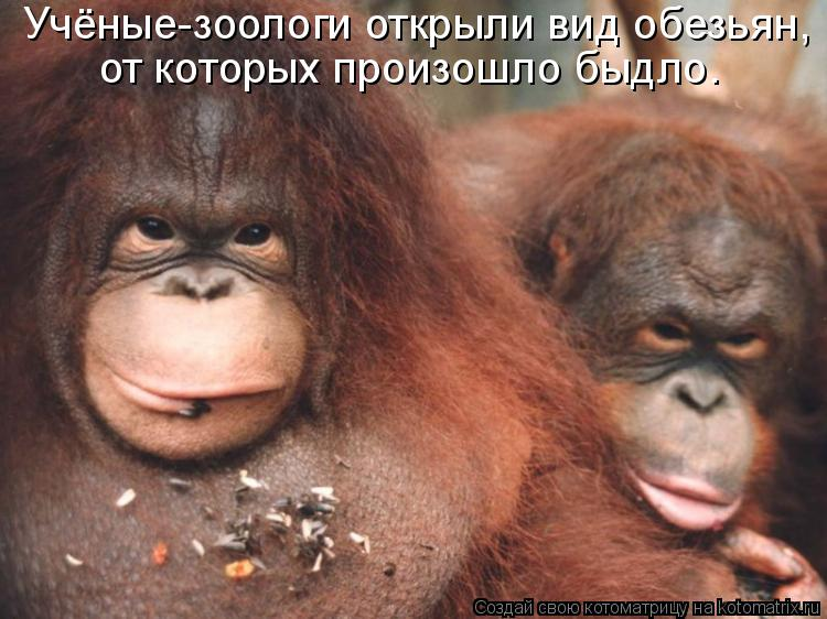 Котоматрица - Учёные-зоологи открыли вид обезьян,  от которых произошло быдло.